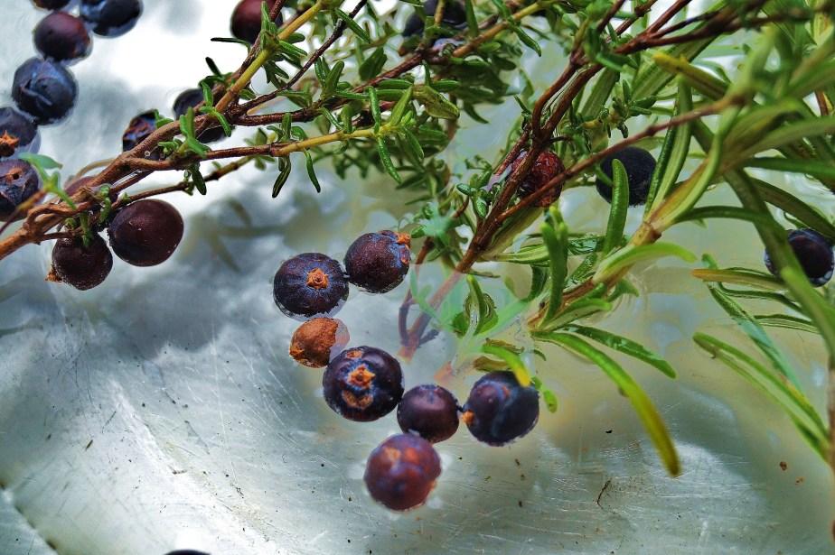 Junniper Berries & Gin