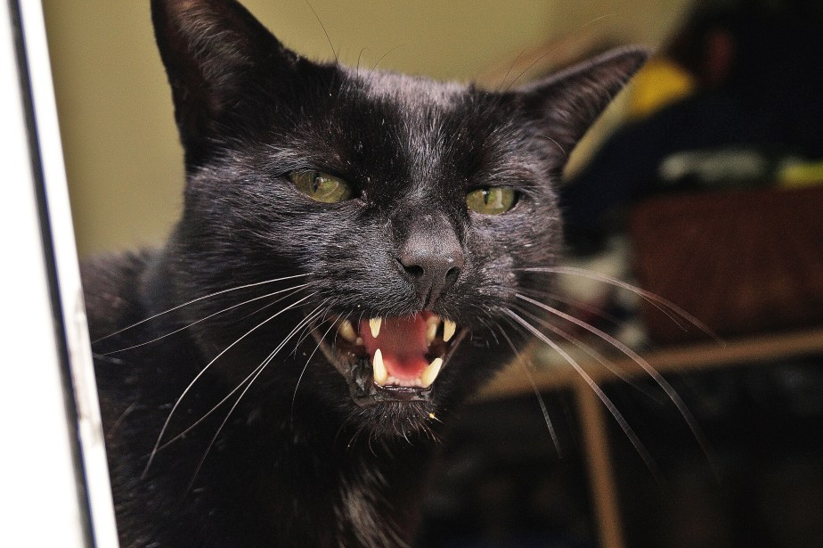 Talkin' Cat Jack