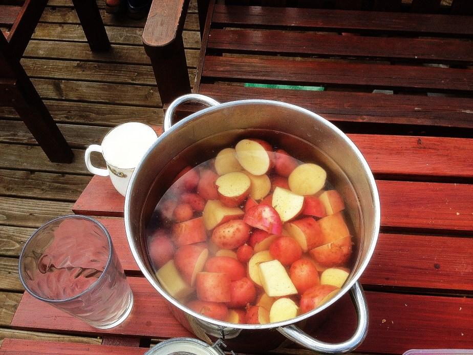 Spuds aka potatoes