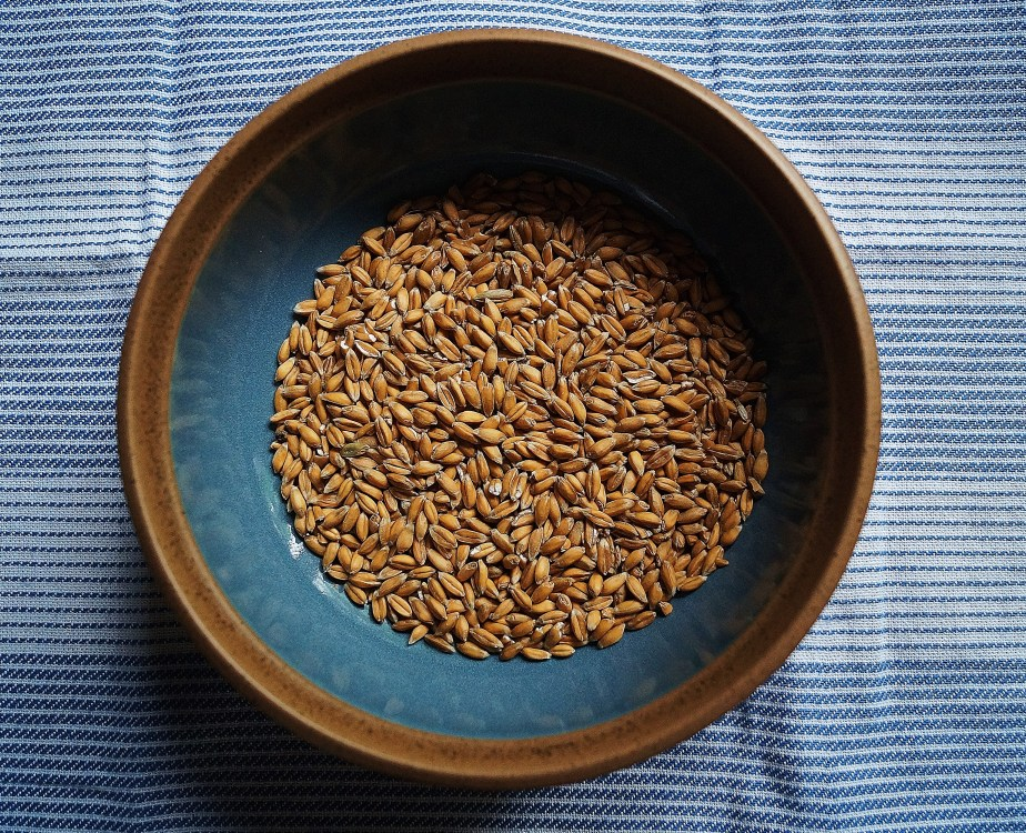 Spelt berries, used since 5000 bc!